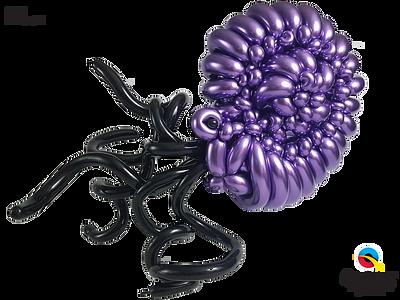 Bex_Cohen_Ammonite.png